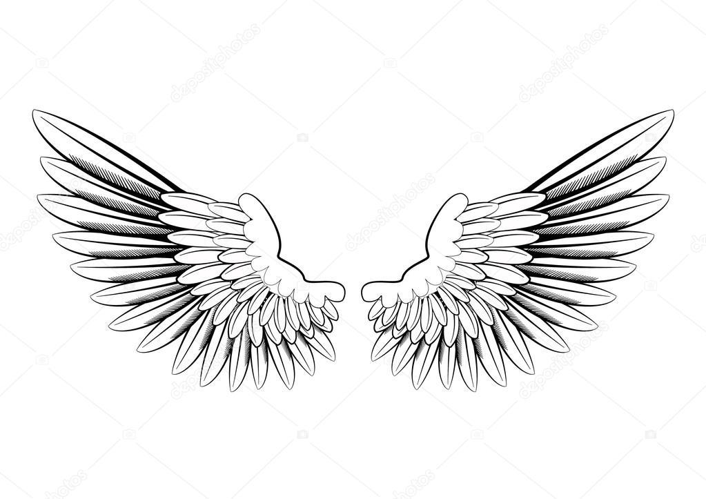 Svarta och vita änglavingar — Stockfotografi © jamesstar  90391646 f59f1973848ed