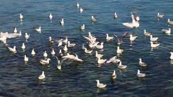 Racek na arabské moře a oceánu létat poblíž pláže kopce a hory