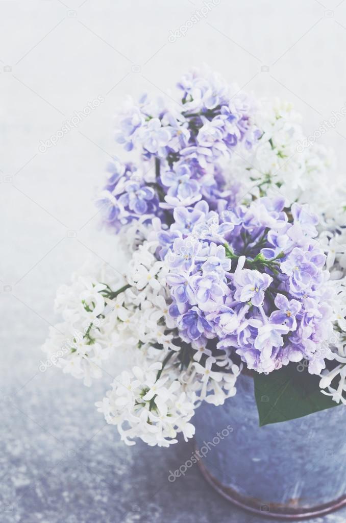 Weiß und lila lila Blumen in Metallbehälter auf grauen Hintergrund ...
