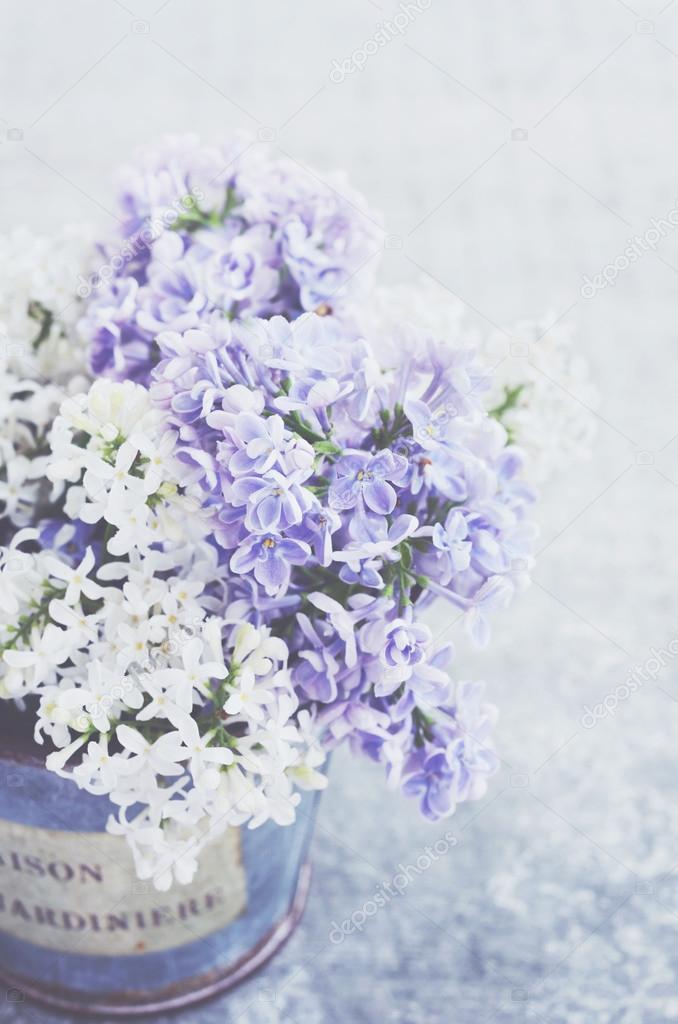 Weiß und violett lila Blumen in Vintage Vase auf grauen Hintergrund ...