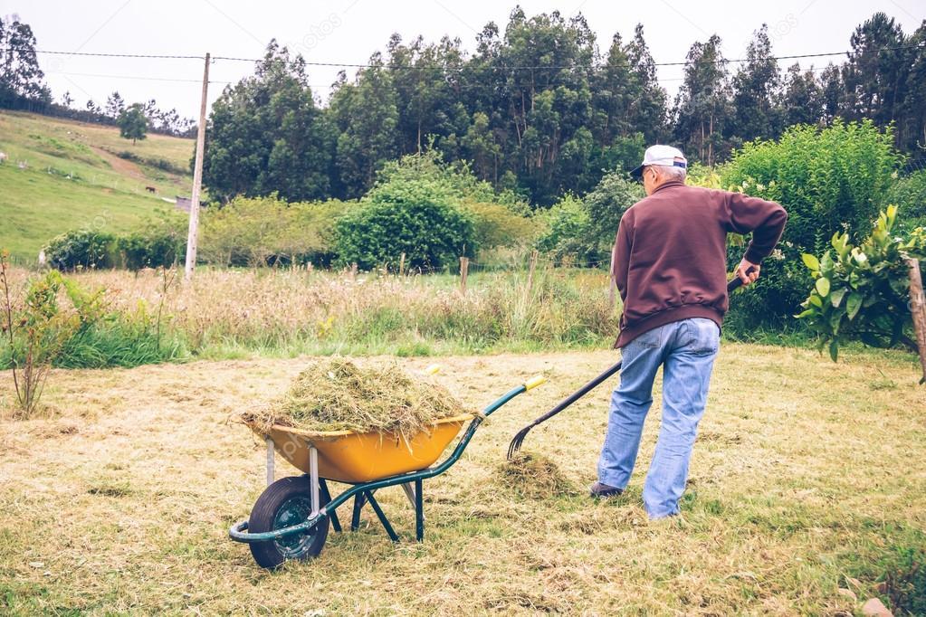 Senior man raking hay with pitchfork on field