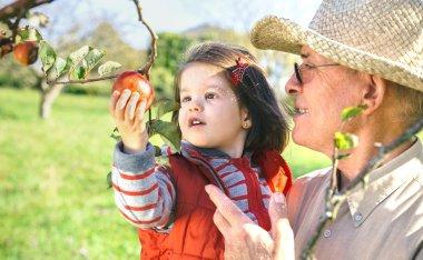 Senior man holding adorable little girl picking apples