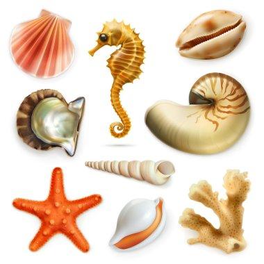 Seashells, vector icon set