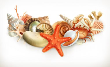 Set of seashells, vector illustration