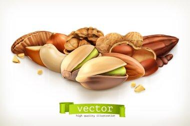 Nuts, vector illustration