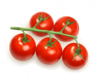 Cherry tomatoes, vector illustration