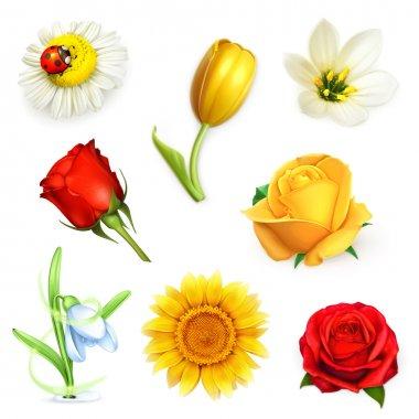Flowers illustrations set