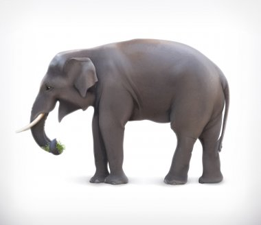 Vector illustration of Elephant eating grass on white background stock vector