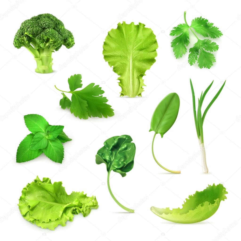 Green vegetables and herbs set, organic vegetarian food, vector