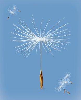Dandelion seeds on blue
