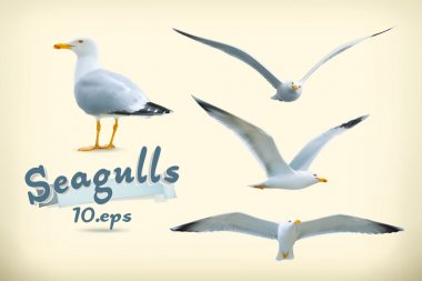 Seagulls illustration icons