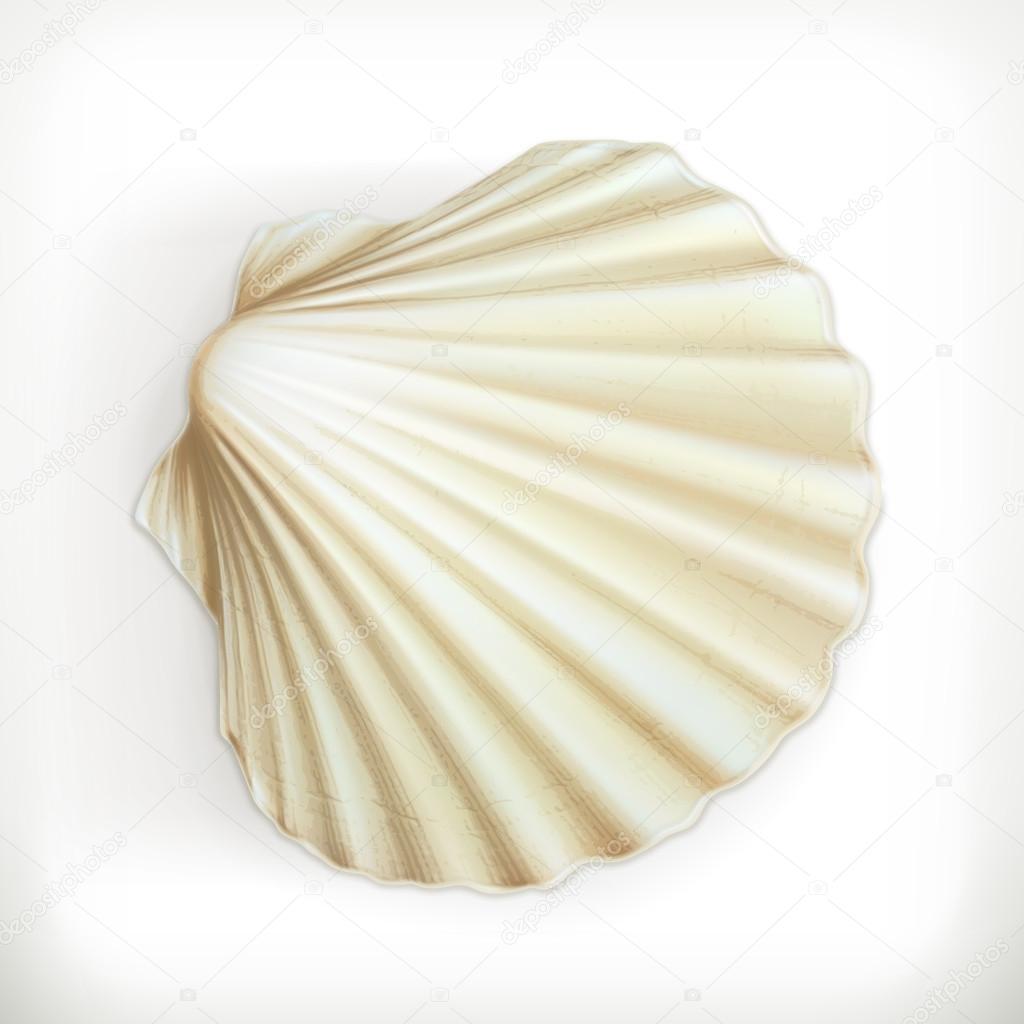 Seashell icon on white