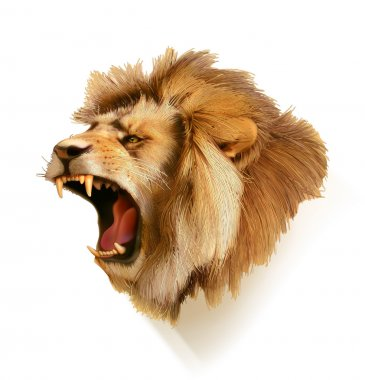 Roaring lion, head