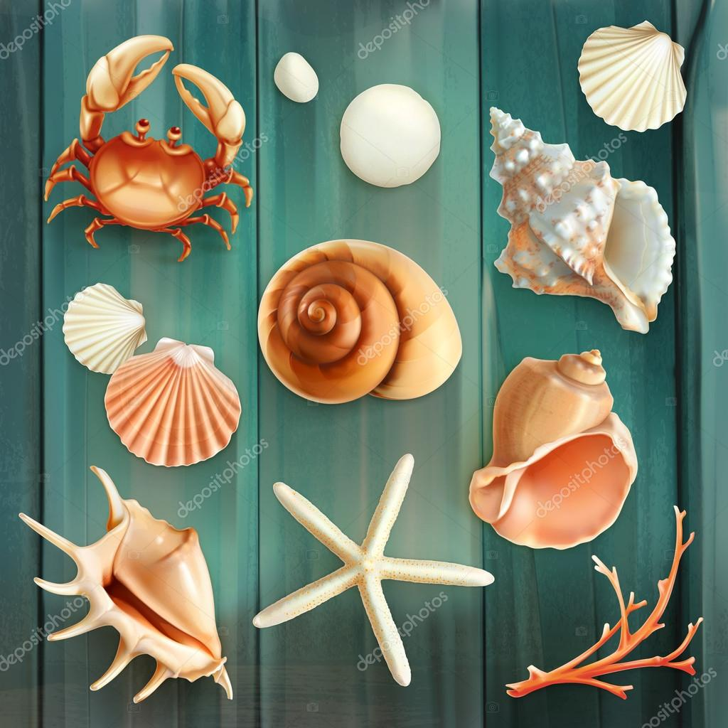 Seashells icons set