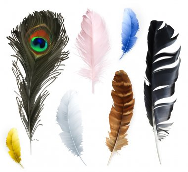 Feathers icons on white