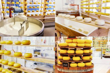 Collage with cheese manufacturing process