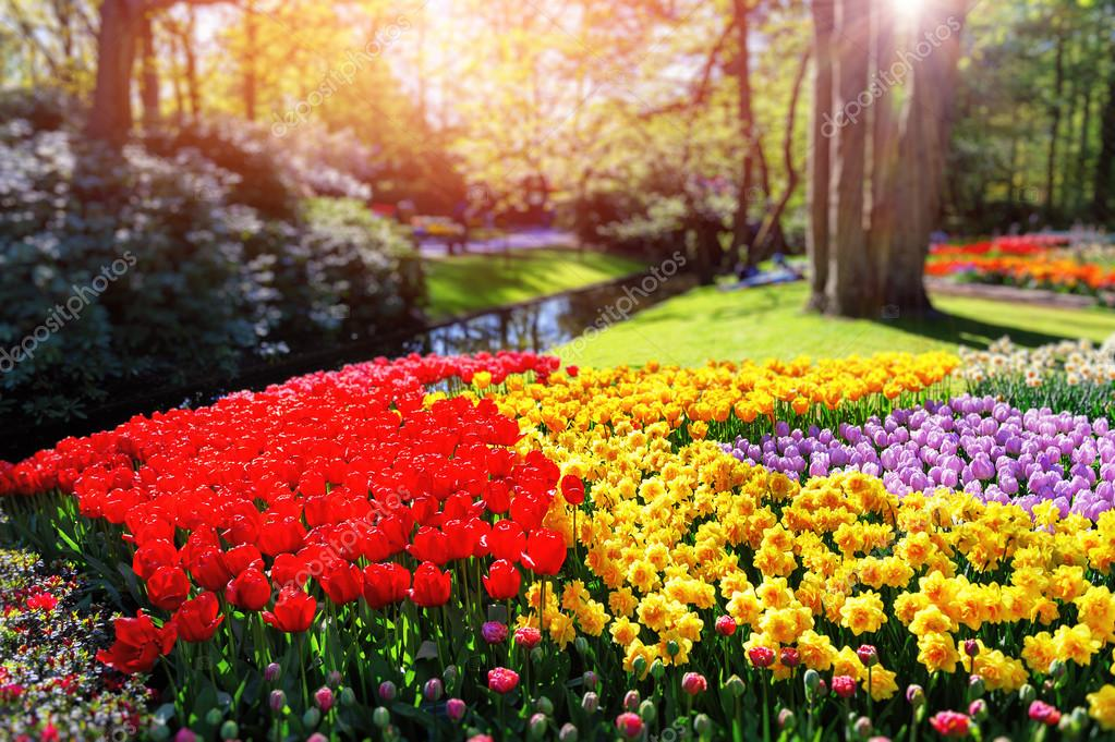 Flower bed with multicolor tulips and daffodils