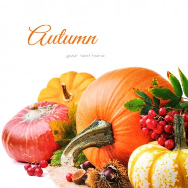 Autumn setting with various pumpkins