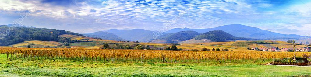 Autumn vineyards of wine route