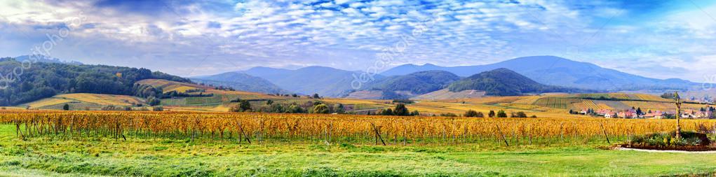 Autumn vineyards of wine route