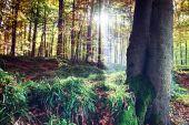 Fotografie podzimní krajina v slunečný den