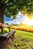 Fotografie Krásné letní krajina s dřevěná lavička