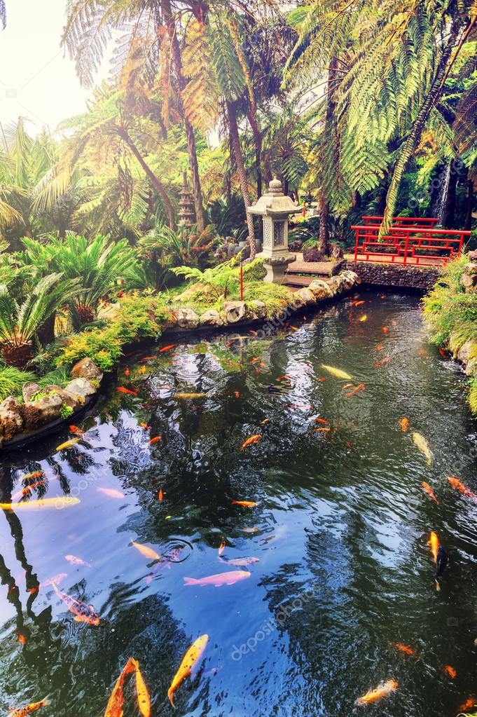 Japanese garden with swimming koi fishes