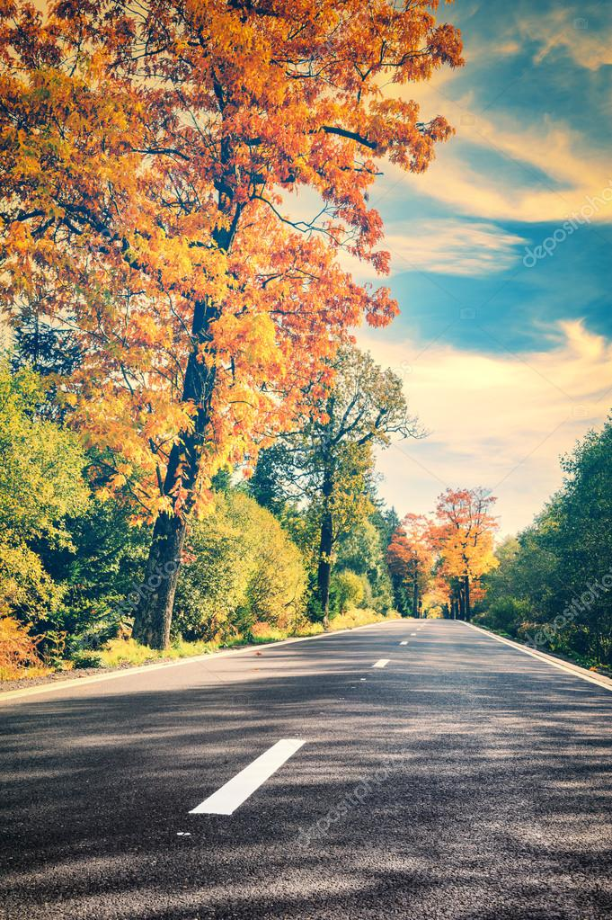autumn landscape with empty road