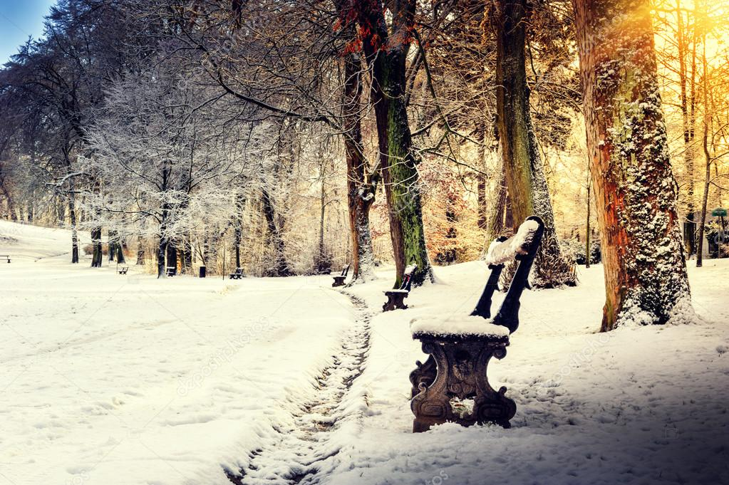 Winter landscape with snow covered park