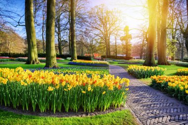 Spring landscape with yellow daffodils