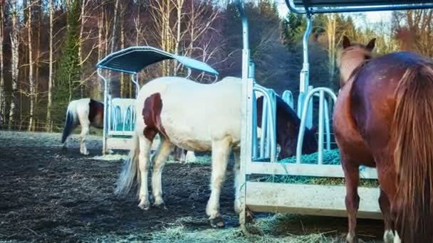 Farma koní na pole