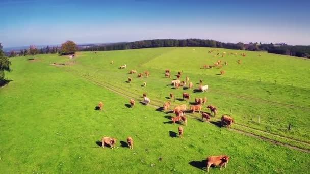 letní krajina s pasoucí se krávy