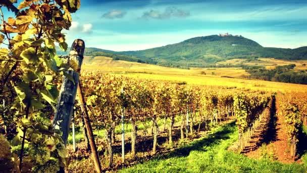 Podzimní vinic vinařské trasy