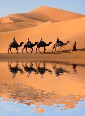 Camel Caravan in Sahara Desert
