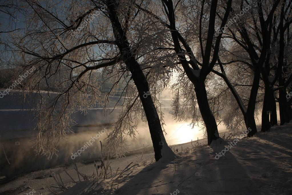 Frost on the trees in Yekaterinburg, Russia.