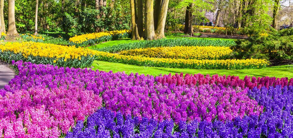 amazing floral park Keukenhof in Holland