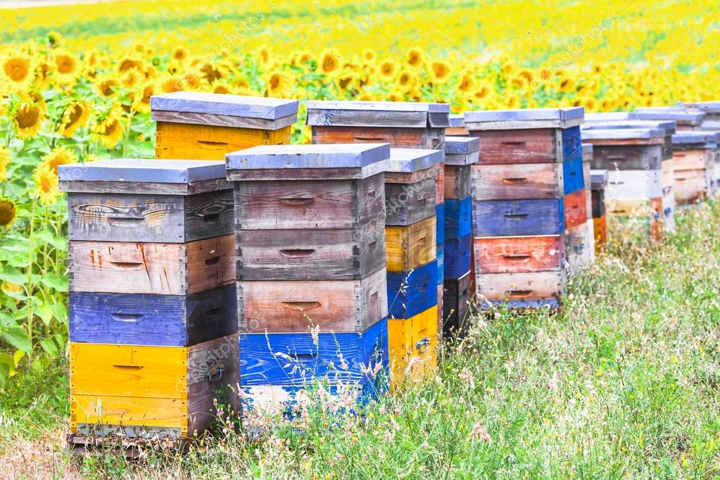Colorful beehives and sunflower' field in Provance