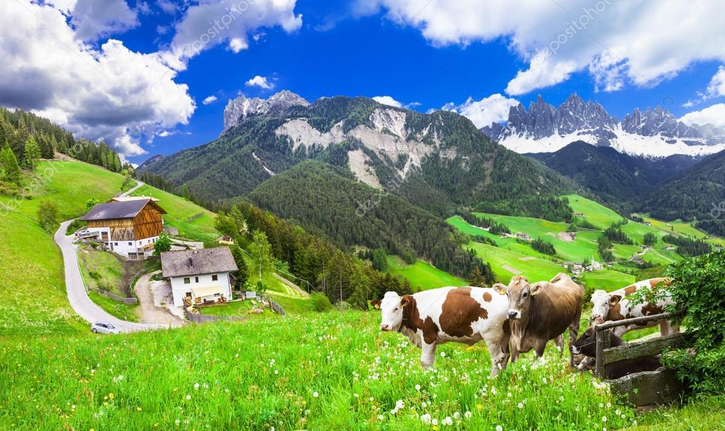 beautiful nature landscapes - pastures of Dolomites