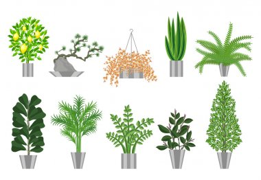 Big trees house plants collection. Vector illustration