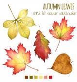 podzimní listí vodní barvu na bílém pozadí