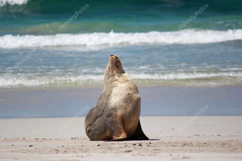 Seal Bay Pups Body2 Jpg