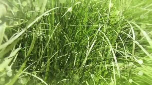 Blurred Grass Background.