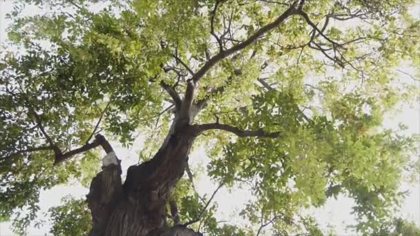 Pohyb listu na větvičku ze stromu když vítr foukat, ant pohled