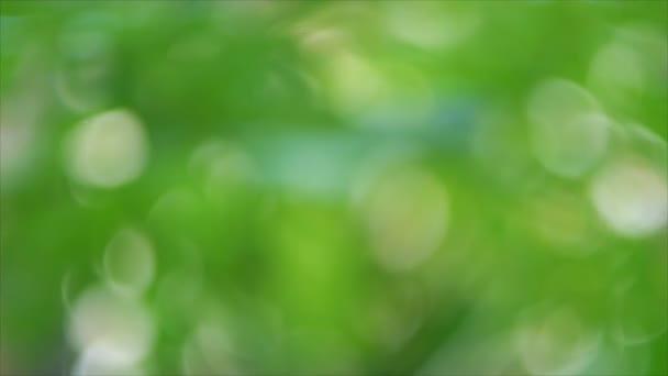 Abstraktní pozadí zelené bokeh rozostření zelené listy a strom