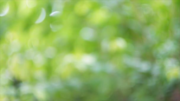 abstrakte grüne Bokeh des Blattes Hintergrund