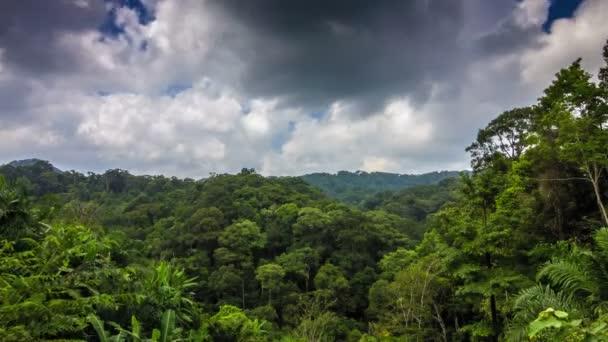 Tropický prales s mraky časová prodleva