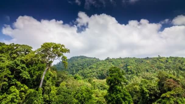 Tropický prales s mraky do fotoaparátu časová prodleva
