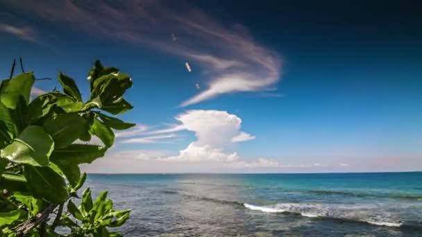 Vlny oceánu se zeleným listovým časová prodleva