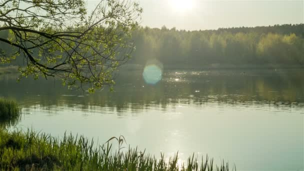 Forest lake evening