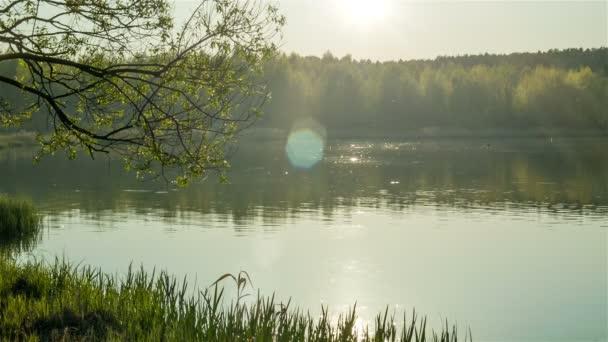 Erdei tó este